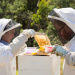 CSIRO picks Intel's Edison for bee-tracking project